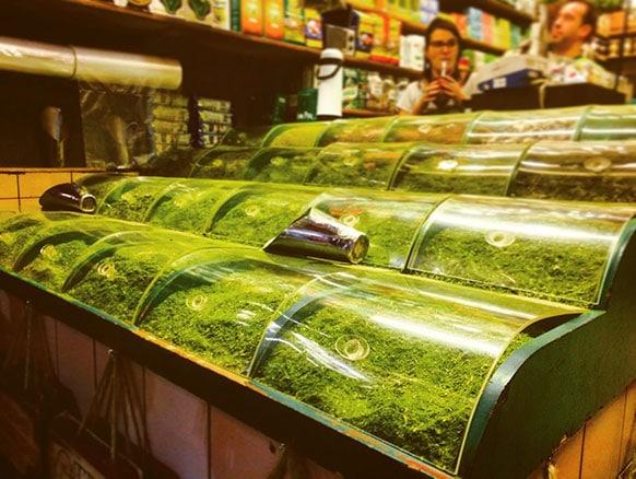 loja para comprar erva mate é uma duvida entre muitas pessoas