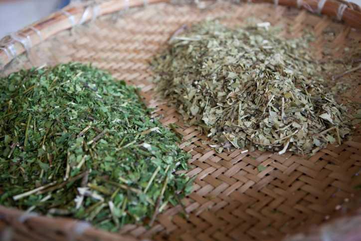 Dois montes de erva-mate. Erva mate cancheada fresca e erva-mate cancheada repousada (dourada)