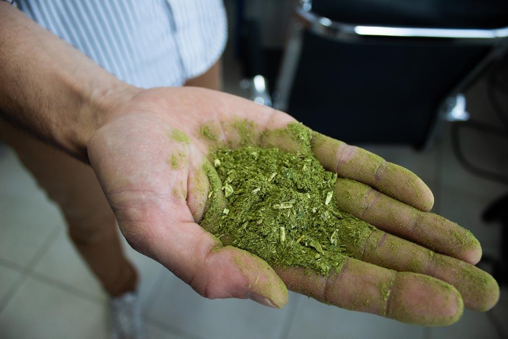 O superalimento: conheça a erva-mate
