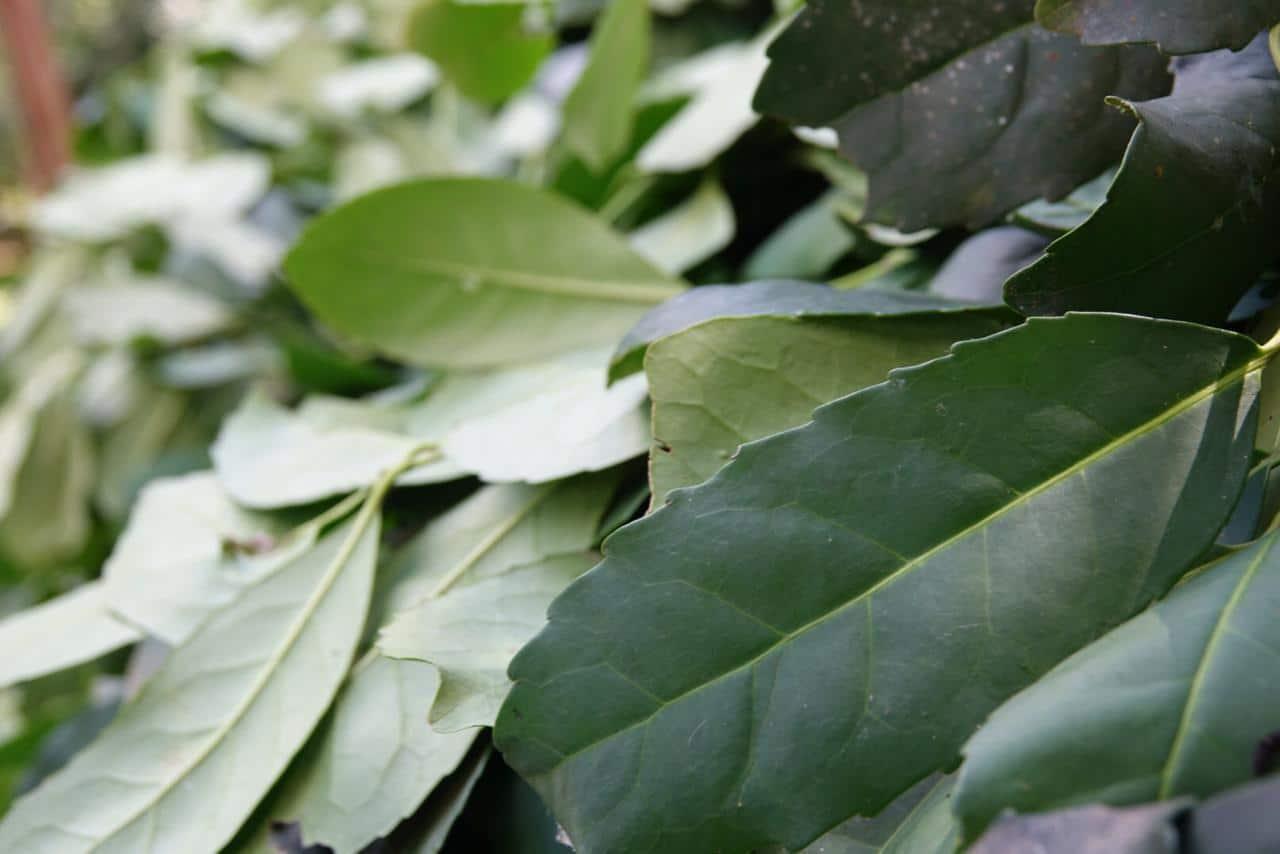Meta Mate: uma produtora de erva-mate diferenciada